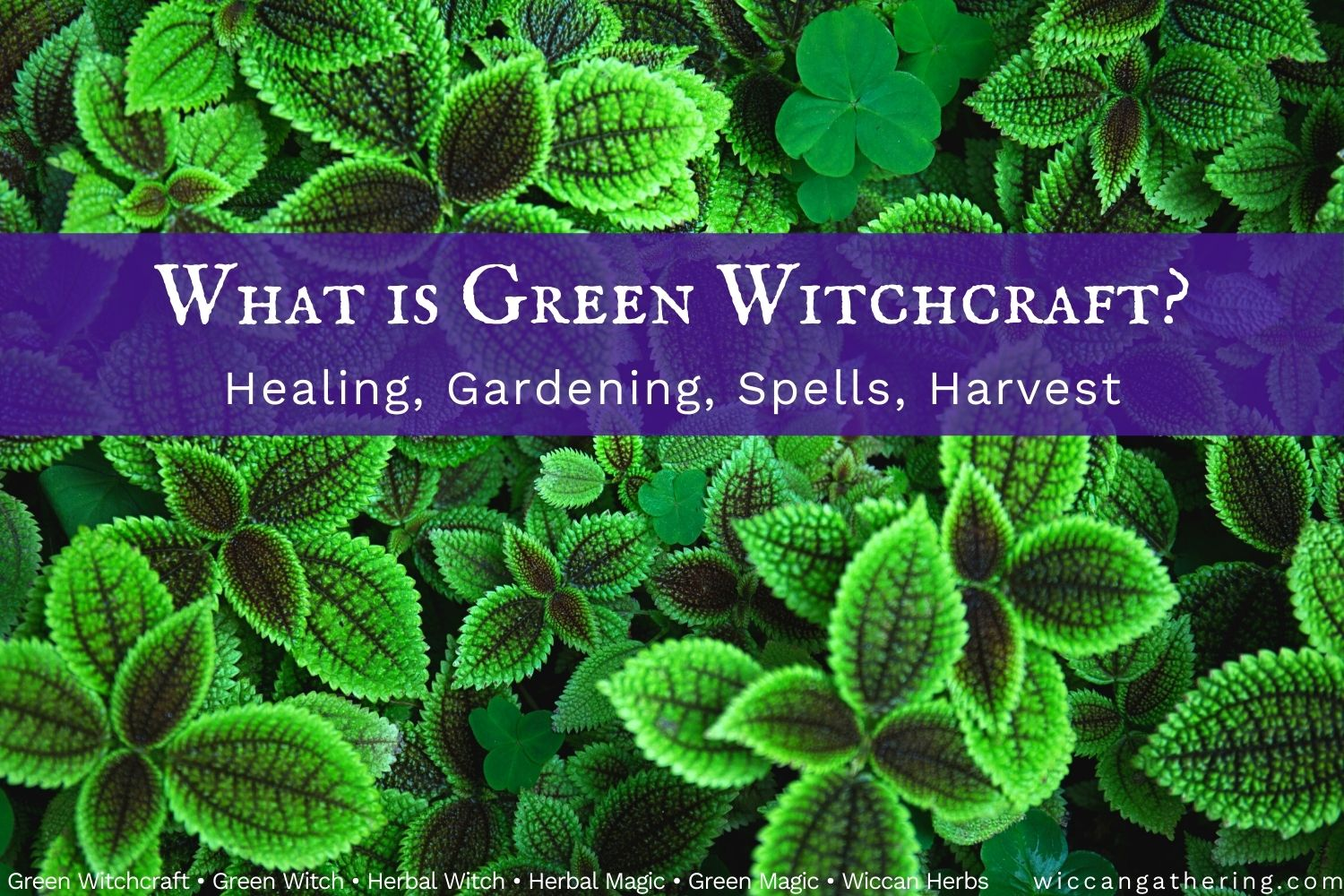 What Is Green Witchcraft